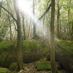 白谷雲水峡の森の中で一瞬日差しが出ました。神秘的!