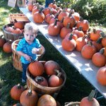 Picking out pumpkins at Jay Day, our popular Fall Family Festival