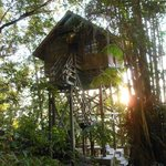Treehouse 2