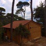 La Maison de la Forêt: Pommier