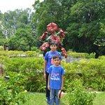 Hibiscus display