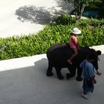 Baby elephant at Outrigger