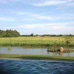 pool, pond and paddy facing view!