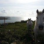 Des chevaux à coté de la maison
