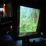 Grosse Aquarien mit der bunten und schönen Meeres-Vielfalt