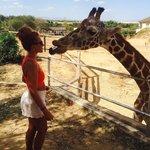 Feeding a giraffe with my face