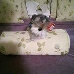 Do not disturb pup