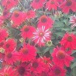 Beautiful perennials