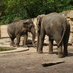 Вольер со слонами.