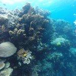 Korallen / corals