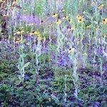 July-2014 Wildflowers