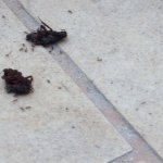 Cockroaches by the pool. Been there all day