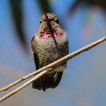 Andree Clark Bird Refuge Foto