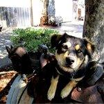 The winery dog - Chloe!
