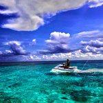 Yunus ve Balina İzleme
