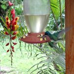 The humming bird feeder outside the dinning room