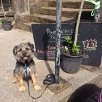Walter the pooch was made most welcome at Pinnochios, who moved tables outside for us to dine wi