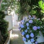 Flowers line walkways between the cottages