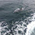 Foto de Clare Island Ferry Co.