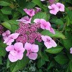 Beautiful flowers !