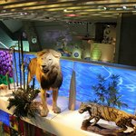 Perot Museum Of Nature And Science - Discovering Life Hall