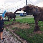 Еды слонам! ;)