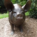 Life-sized bronze pig behind the art museum