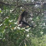 Monkey on trip to Lamanai