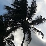A palm