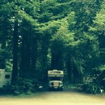 Our camper in our spot under the redwoods!
