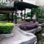 Garden with  Koi pool
