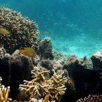 More coral gardens