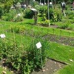 Botanischer Garten der Technischen Universitat Braunschweig