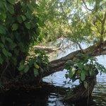 Photo de Melville Island Lodge