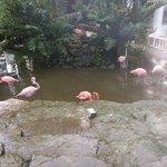 Los hermosos Flamingos que tenia frente a mi cuarto