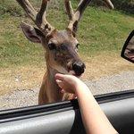 Deer we fed.