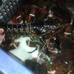 vasche di lobsters vive all'interno del locale.
