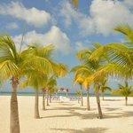 beautiful palm isle