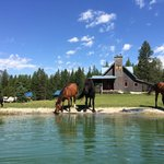 Horses at the pond