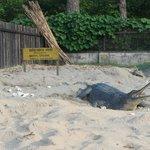 The crocodile breeding centre.