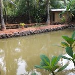Natural Fish Pond in the Garden