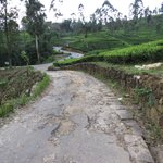 Ceylon Tea Trails (Aug 2013): Horrible 'road' leading to Norwood Bungalow