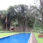 Ceylon Tea Trails (Aug 2013): Beautiful rare bamboos at Norwood Bungalow