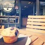 Best blueberry muffin in town!