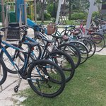 Bicycle for rental