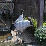 Ueno Zoo (2014.02.26)