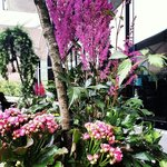 Summer flowers in full blossom at our terrasse.