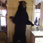 Friendly bear in lobby!