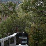 Descente du train dans les arbres