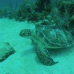 Always a turtle around